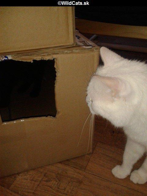 škatuľa pre mačky