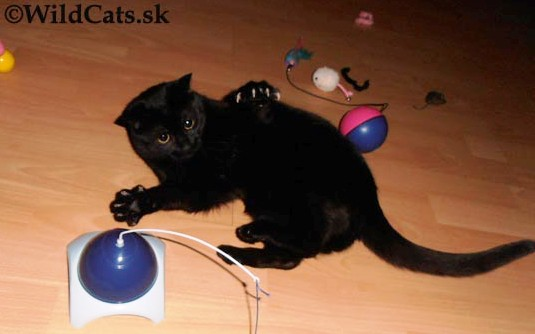 Mačacia manikúra a pedikúra: Starostlivosť o pazúriky