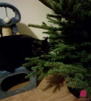Ako na to, aby vianočný stromček a dekorácie odolali mačkám?