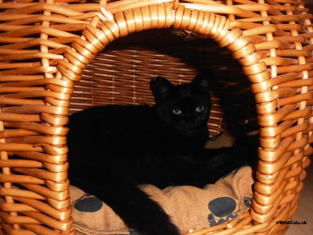 Luxusné postieľky, pohovky, pelechy a iné doplnky pre mačky
