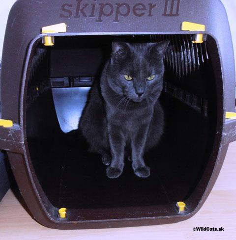 Cestovanie s mačkou….pohoda či pohroma?!