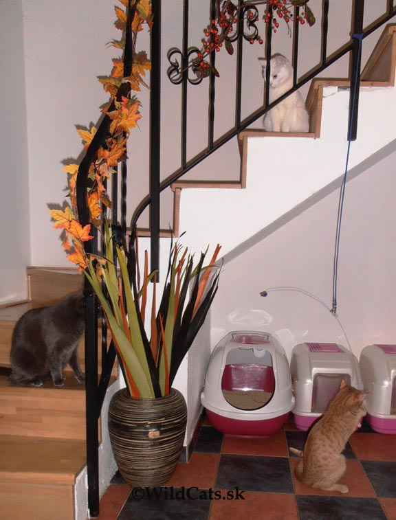 visiaca hračka cat dancer