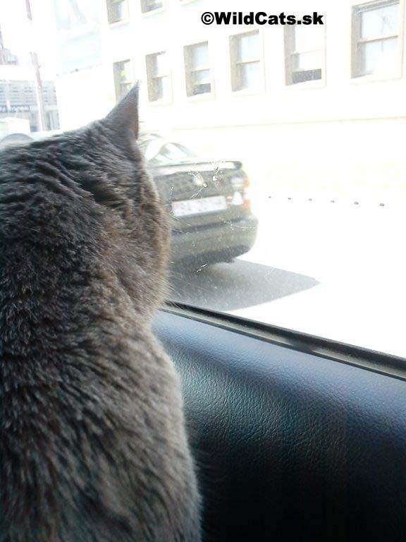 Mačka a umývač okien si spolu vytvorili krásny priateľský vzťah
