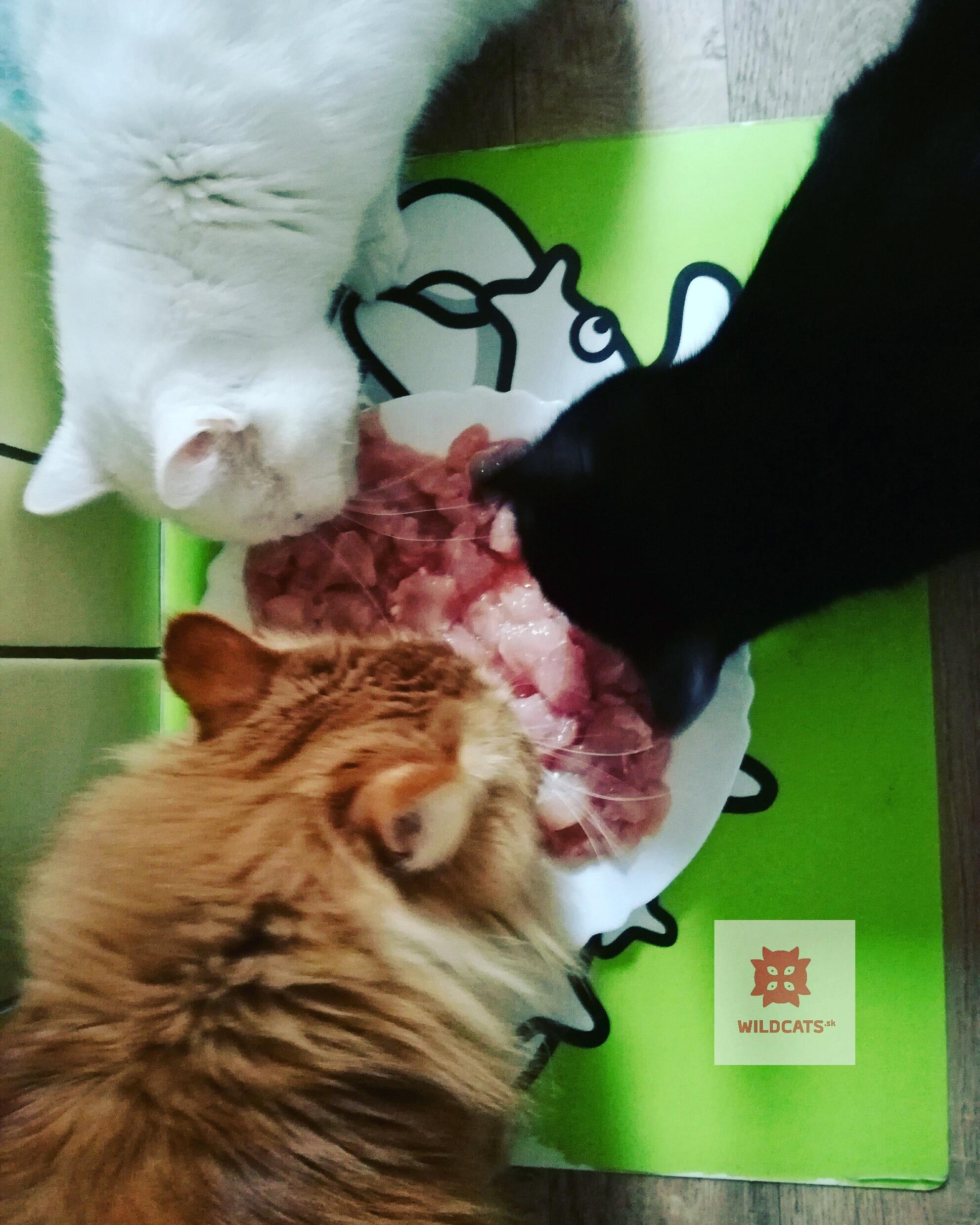 OTÁZKY&ODPOVEDE: Ako kŕmiť mačiatko? I bezobilninovými krmivami?