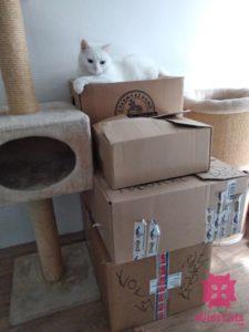 Bella na krabiciach