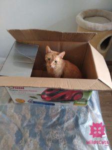 Robin v krabici, hrdzavý kocúr