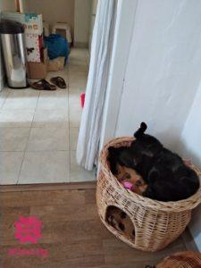 Lola spí, čierna mačka, nábytok, sťahovanie