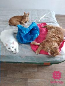 Robin, Aimme, Bella sřahovanie praha tašky posteľ