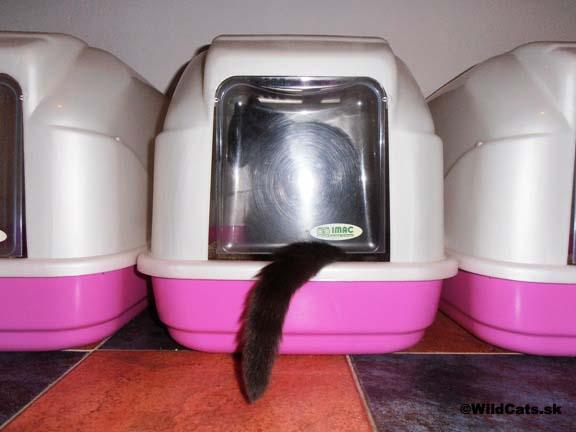 Všetko dôležité o mačacej toalete