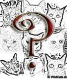 OTÁZKY & ODPOVEDE: Naša mačka má blchy