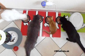 Kollby, Bella, Lola a Robinko sa kŕmia