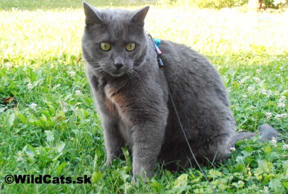 Na prechádzke s mačkou….ako na to?!
