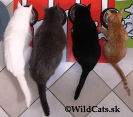 Všetky naše mačky sú už úspešne začipované