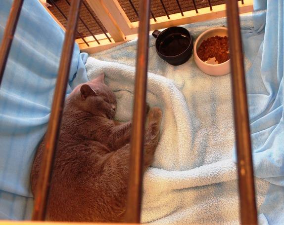 Pozvánka na jarní Umisťovací výstavu koček