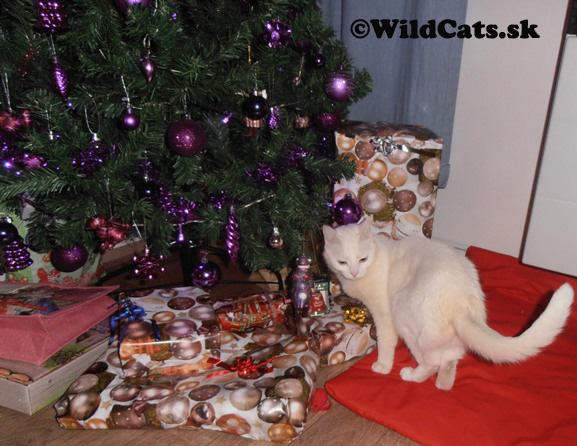 Vianočná nádielka Bella