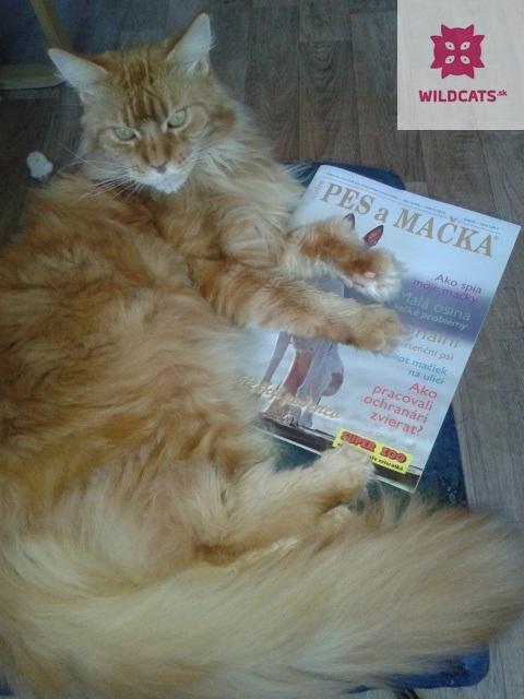 Halloweenske číslo magazínu Pes a mačka sa už predáva