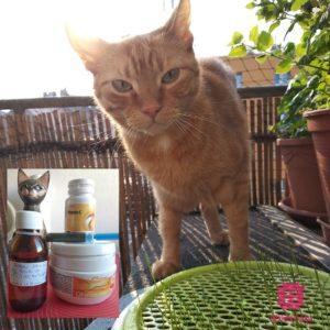 Liečba zlyhávanie obliečiek u kocúra homeopatia, vitamín C