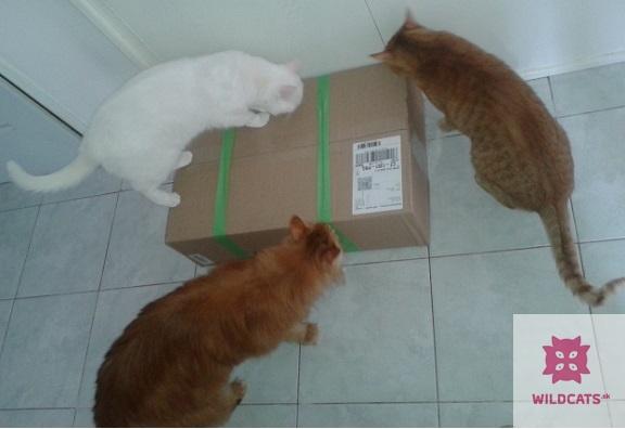 Recenzia aromatického krmiva Porta 21 Feline Finest Sensible – Grain Free