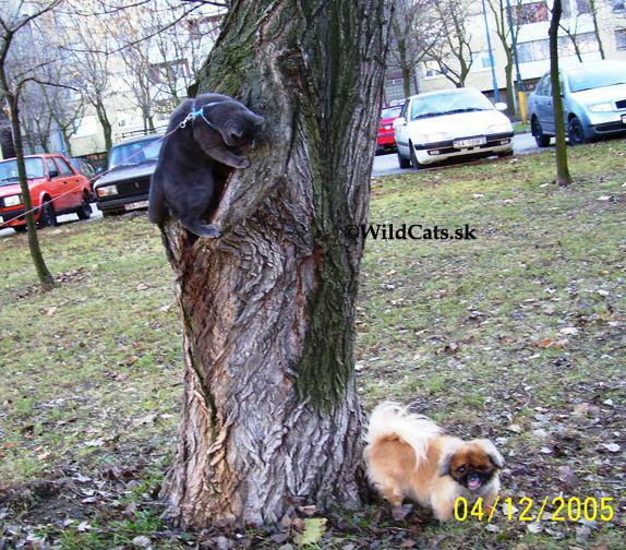 Kollby na strome
