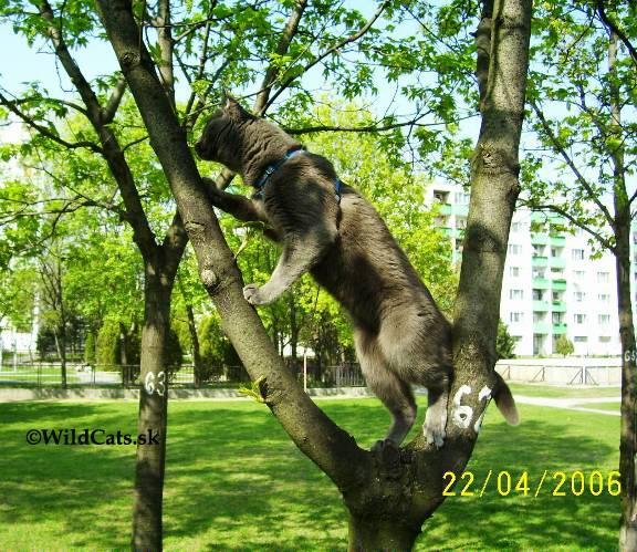 mačka na strome