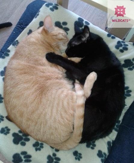 """Mačka držala ruky svojich majiteľov na """"poslednej ceste"""" k veterinárovi"""