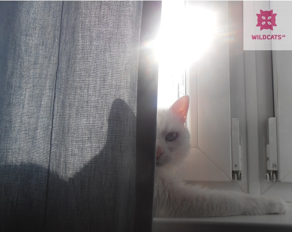 doba.sk :  Záhadný život mačiek, zachytený v tajomných portrétoch